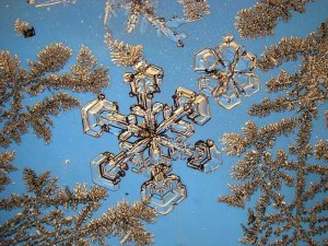 Snowflake and ice flowers. Eye of Science / Photo Researchers / Universal Images Group